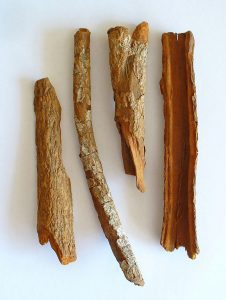 Peruvian bark (Cinchona officinalis) (Source: Wikimedia Commons)