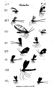 A screen shot from The Angler's Vade Mecum by Carroll, 1818 (Plate 12, PDF p. 169)